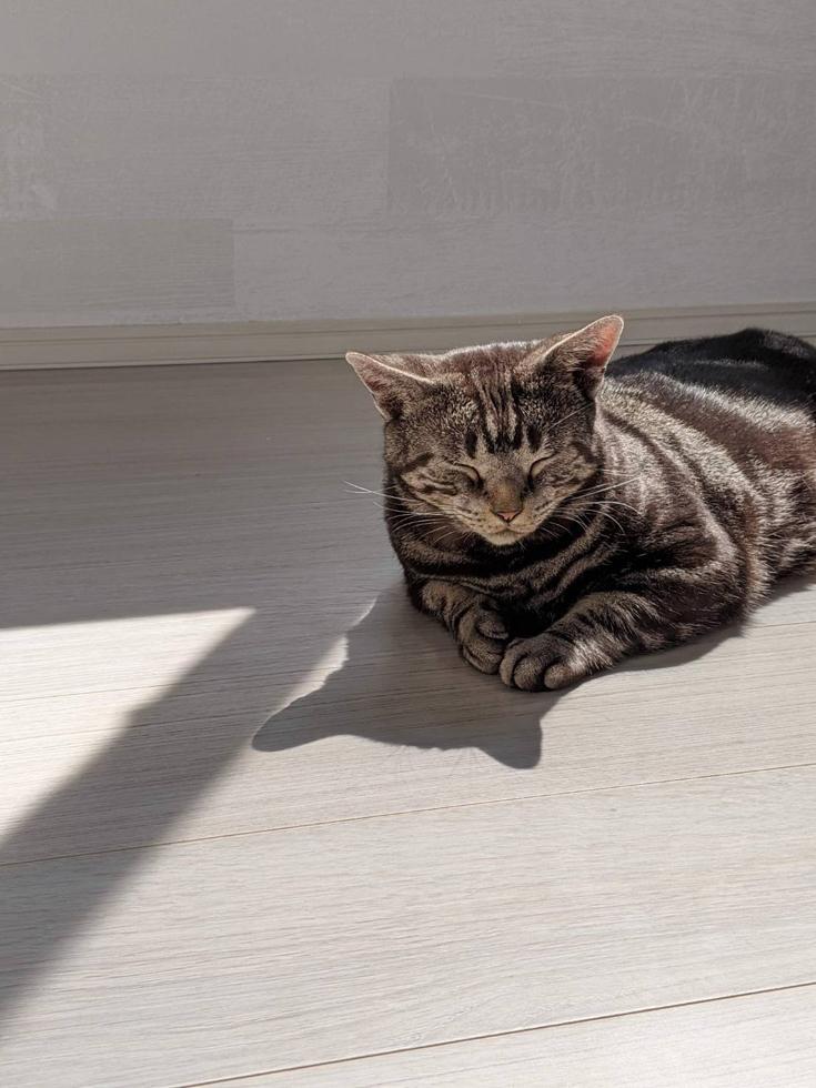 【新築】どうぶつのお医者さん一家と「愛猫」が暮らす、いえ。–22